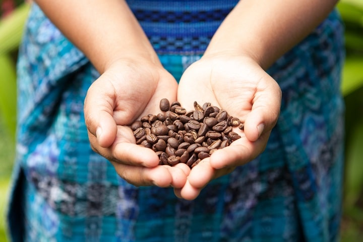 Short History of Costa Rican Coffee