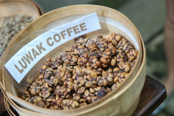 Kopi Luwak (Cat Poop Coffee) – What Is It & Why It's Pricey