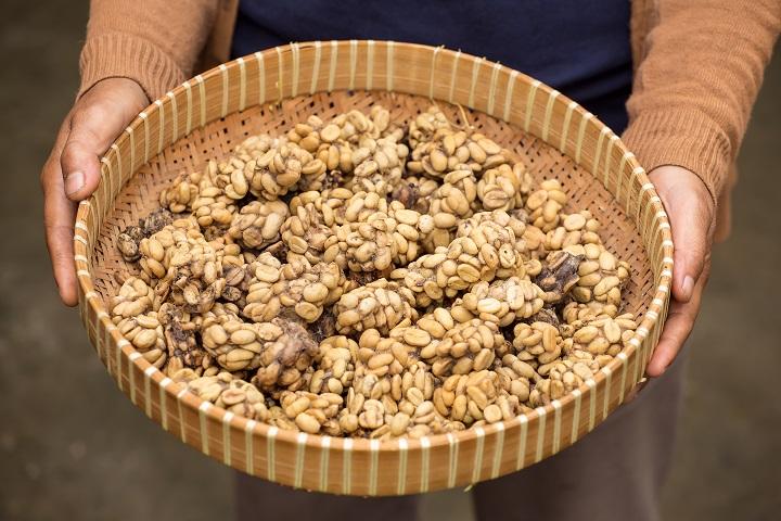 FAQ About Sumatra coffee