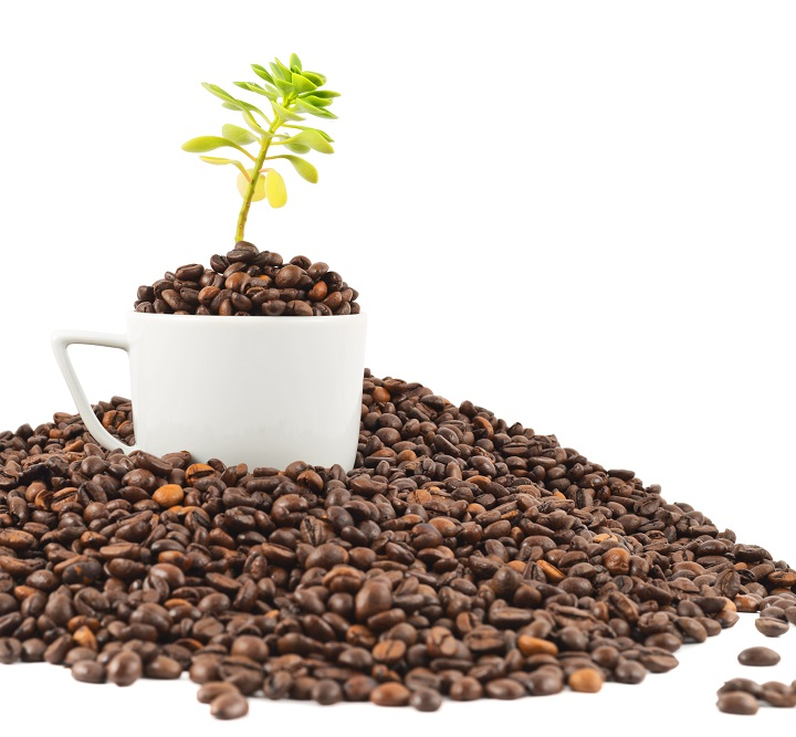 How to Grow Coffee at Home